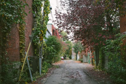 Alleys of fall